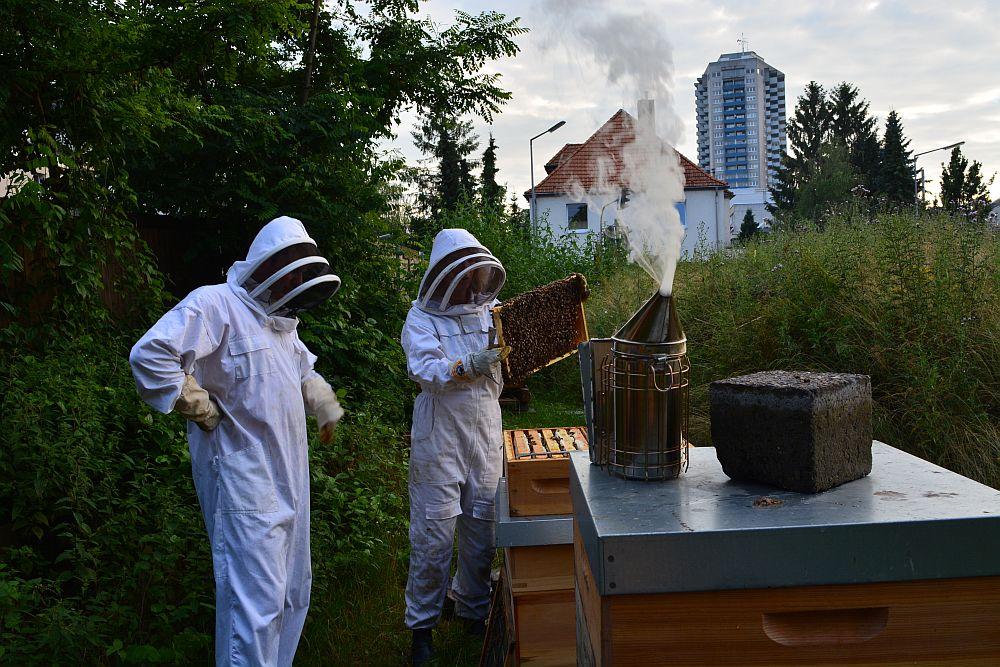 NeuLand-ImkerInnen bei der Honigentnahme