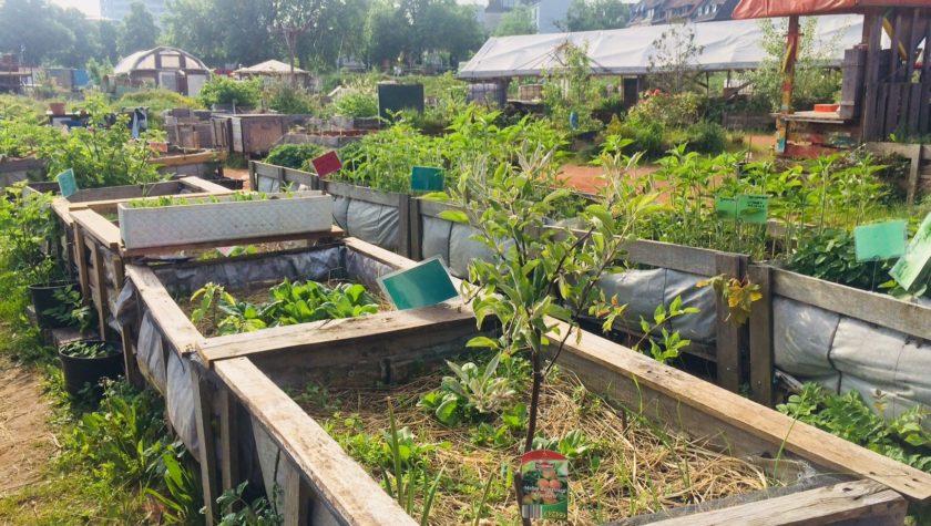 Hochbeete Urban Gardening